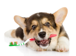 Puppy_With_Toothbrush_Inner_1