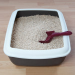 Your Litter Box and Essential Oils
