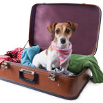 Travel and Anxiety for Your Pet