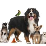 Probiotics for Your Pet