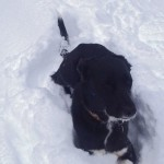 Protecting your Pet's Skin in Wintery Weather