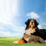 Are You and Your Pets Ready for Spring?