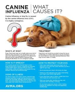 Canine+influenza+handout+4